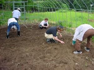 畑作業 2005 008